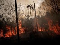 Sức ép ngăn chặn cháy rừng Amazon tại Brazil
