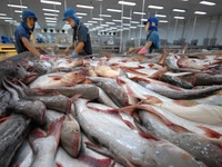Prospect for Tra fish exports in 2019