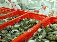 Vietnam expects to export more shrimp to China