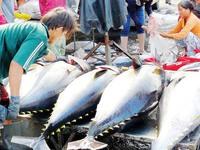 Declined tuna price affects fishermen