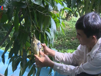 Fruits carved with messages gain popularity for Tet
