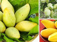 Vietnamese mangoes enter South Korean supermarkets