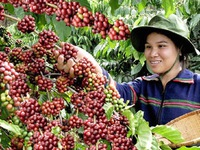 Coffee industry strives to earn US$5 billion from export by 2030.