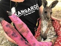 1,25 tỷ cá thể động vật đã chết do cháy rừng tại Australia