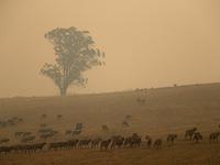 Khói do cháy rừng Australia phát tán khắp thế giới