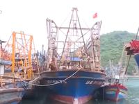 Bình Định: Báo cáo Thủ tướng tàu cá Nghị định 67 không mua được bảo hiểm