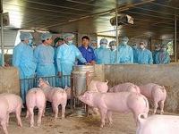 Hà Nội: 16 quận, huyện, thị xã qua 30 ngày không phát sinh dịch tả lợn châu Phi