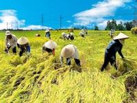 Hà Nội: Kết quả phát triển nông nghiệp, nông thôn đạt những thành tựu mới
