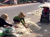 Nỗi buồn của người dân tại 'vựa lúa' miền Trung sau lũ