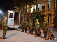 Đội chó nghiệp vụ vào hỗ trợ tìm kiếm nạn nhân mất tích tại Rào Trăng 3