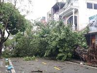 Bão số 13 làm cây đổ ngổn ngang, nhà tốc mái, tàu cá bị đánh chìm