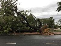Bão số 13 ảnh hưởng, Thừa Thiên - Huế có gió rất mạnh 'quật' đổ cây