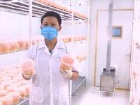 Hoa việc tốt: Hợp tác xã của ông chủ nghiện nấm