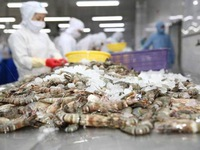 Shrimp exports see double-digit growth despite COVID-19 impact