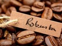 Coffee exports suffer decline over ten months
