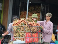 Hai Duong prepares to export fresh lychees to Japan
