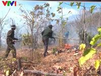 Ninh Thuận phòng chống cháy rừng