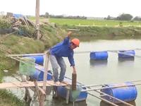 Đa dạng hóa chuỗi liên kết trong sản xuất tiêu thụ thủy sản