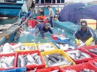 Khanh Hoa's tuna fishermen net high profits