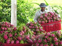 Vietnam - Japan trade up 8.6% in two months