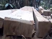 Gia Lai phát hiện vụ phá rừng quy mô lớn