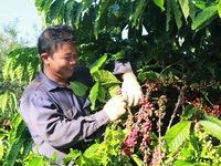 Đòn bẩy thúc đẩy ngành hàng cà phê phát triển bền vững