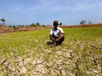 Hỗ trợ 530 tỷ đồng cho 8 tỉnh ĐBSCL phòng chống hạn hán, xâm nhập mặn