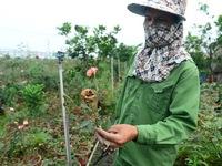 Cách ly y tế toàn thôn, người dân trồng hoa Hạ Lôi ngổn ngang, lo lắng trăm bề