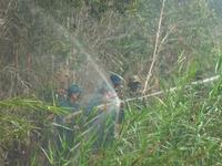 Cà Mau liên tục xảy ra cháy rừng