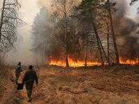 Ukraine: Ô nhiễm không khí nghiêm trọng do cháy rừng
