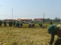 Bộ đội giúp người dân gặt lúa bị ngập nước