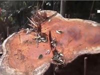 UBND tỉnh Kon Tum lên tiếng về vụ phá rừng quy mô lớn