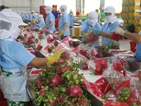 Agro-forestry and fishery sector posts 49% increase in trade surplus