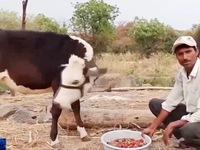 Dịch COVID-19 tác động tiêu cực đến ngành nông nghiệp Ấn Độ