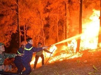 Proactively preventing and fighting forest fires