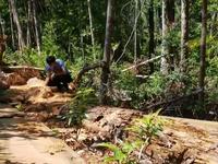 Thêm một vụ phá rừng quy mô lớn ở Gia Lai