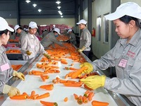 Improved processing industry helps enhance agricultural products