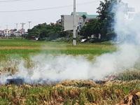 Hà Nội: Kiểm tra việc đốt rơm rạ gây ô nhiễm không khí