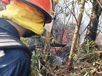 Xuyên đêm dập cháy rừng ở Hà Tĩnh, trưa 30/6 lửa lại bùng phát
