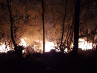 Cháy rừng ở Diễn Châu, Nghệ An: Gần 1.000 người nỗ lực chữa cháy