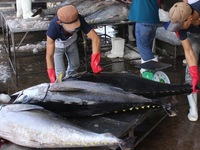 EU to remove tax on 11,500 tonnes of Vietnamese canned tuna