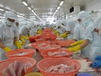 Vietnam's seafood exports down 10% due to coronavirus impact