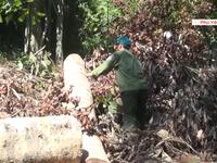 Bắt giữ 3 đối tượng trong vụ lâm tặc mở đường để phá rừng ở Phú Yên