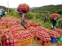 Hàng loạt nông sản Việt Nam sắp lên đường sang EU