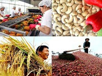 Affirming Vietnamese agricultural products' value