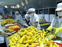 Promoting export potential of Vietnamese agricultural products