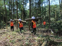 Việt Nam needs more trees: experts
