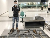 Nearly 30kg of rhino horn seized at Cần Thơ Airport
