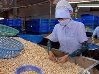 Vietnam's exports to Cambodia up 16.7% in eight months