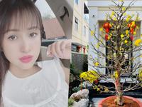 Loạt hoa khoe sắc trong biệt thự tiền tỷ của Thanh Vân Hugo
